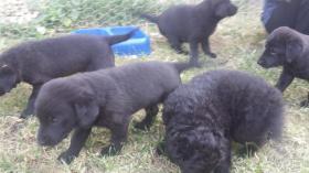 Foto 3 Hunde mitlere Grösse