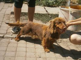 Foto 2 Hunde suchen Kuschelkörbchen