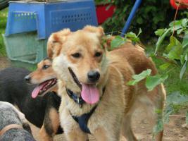 Foto 3 Hunde suchen Kuschelkörbchen