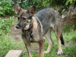 Foto 5 Hunde suchen Kuschelkörbchen