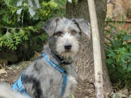 Foto 7 Hunde suchen Kuschelkörbchen