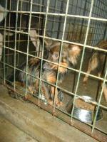 Foto 8 Hunde suchen Kuschelkörbchen
