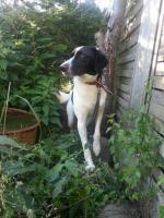 Foto 9 Hunde suchen Kuschelkörbchen