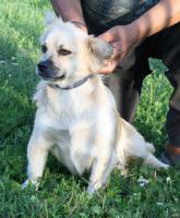 Foto 11 Hunde suchen Kuschelkörbchen
