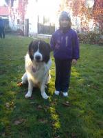 Foto 2 Hunde_Gruppentraining