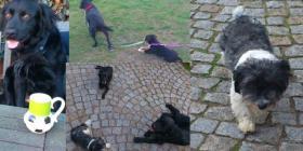 Foto 4 Hunde_Gruppentraining