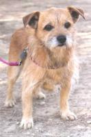 Hunde - Opi ROK sucht ein Zuhause oder PS