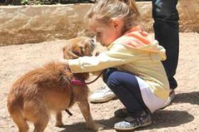 Foto 2 Hunde - Opi ROK sucht ein Zuhause oder PS