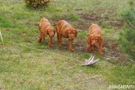 Hundeausbildung