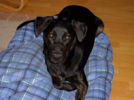 Hundebetreuung in Hannover gesucht