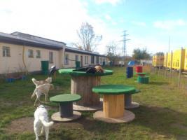 Foto 2 Hundebetreuung/Hundesitter - Hundetagesstätte hat noch Plätze frei!