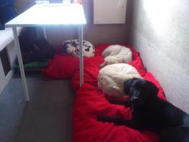 Foto 3 Hundebetreuung/Hundesitter - Hundetagesstätte hat noch Plätze frei!