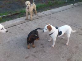 Foto 4 Hundebetreuung/Hundesitter - Hundetagesstätte hat noch Plätze frei!