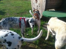 Foto 5 Hundebetreuung/Hundesitter - Hundetagesstätte hat noch Plätze frei!