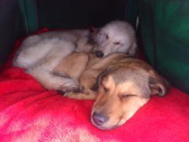 Foto 6 Hundebetreuung/Hundesitter - Hundetagesstätte hat noch Plätze frei!