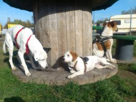 Foto 7 Hundebetreuung/Hundesitter - Hundetagesstätte hat noch Plätze frei!