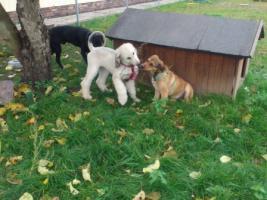 Foto 8 Hundebetreuung/Hundesitter - Hundetagesstätte hat noch Plätze frei!