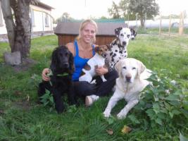 Foto 9 Hundebetreuung/Hundesitter - Hundetagesstätte hat noch Plätze frei!