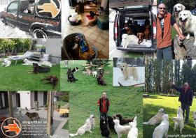 Hundebetreuung | Dogsitting | Tierbetreuung | Tiersitting