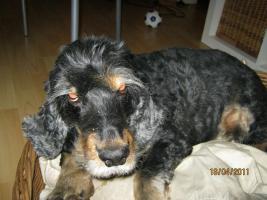 Hundebetreuung & mehr