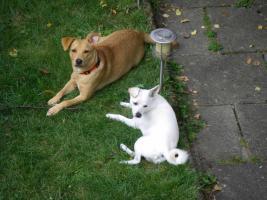 Hundedame Tara sucht ein liebevolles Zuhause !!