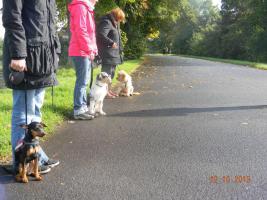 Foto 2 Hundeerziehung-Welpenerziehung-Grundgehorsam