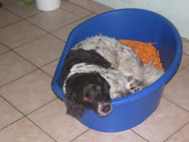 Foto 2 Hundefinca, die Hundepension!