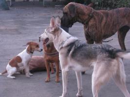 Foto 3 Hundefinca, die Hundepension!