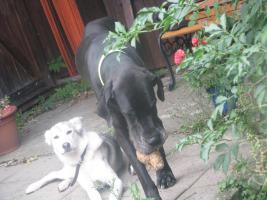 Foto 4 Hundefinca, die Hundepension!
