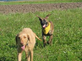 Foto 6 Hundefinca, die Hundepension!