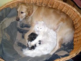 Hundefreundliche Baby-Kater