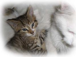 Foto 3 Hundefreundliche Baby-Kater