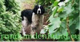 Hundefutter, Tiernahrung, Hund kaufen bei rundumdenhund.eu