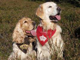 Hundehalstücher individuell, handgearbeitet