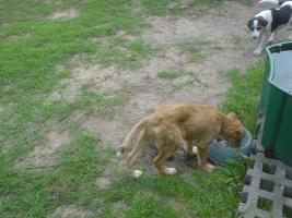Foto 2 Hundekinder