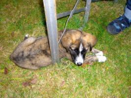 Foto 2 Hundekindergarten-der richtige Weg zur Sozialisierung