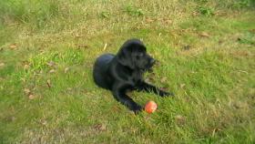 Foto 4 Hundekindergarten-der richtige Weg zur Sozialisierung