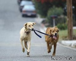 Hundekumpels zum Gassi gehen