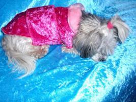 Hundemantel Prinzess in Gr. 33
