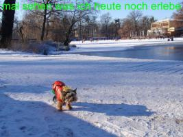 Foto 2 Hundemantel Prinzess in Gr. 33