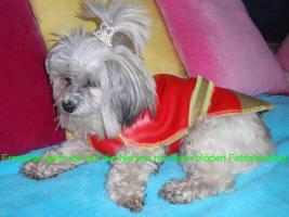Foto 3 Hundemantel Prinzess in Gr. 33