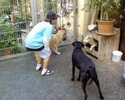 Foto 4 Hundepension
