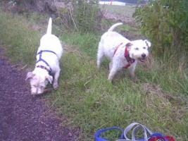 Foto 5 Hundepension in Plaidt