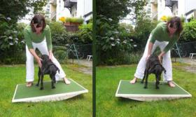 Foto 4 Hundephysiotherapie