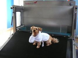 Foto 6 Hundephysiotherapie