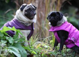 Hundepullover und Mäntel