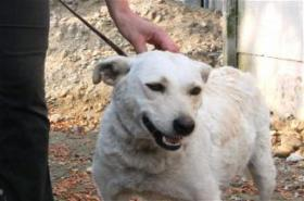 Hundeschönheit Gilda ist einfach nur lieb!