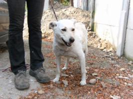 Foto 2 Hundeschönheit Gilda ist einfach nur lieb!