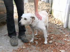 Foto 4 Hundeschönheit Gilda ist einfach nur lieb!