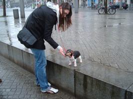 Foto 6 Hundeschule Bremen: Neue Welpenkurse